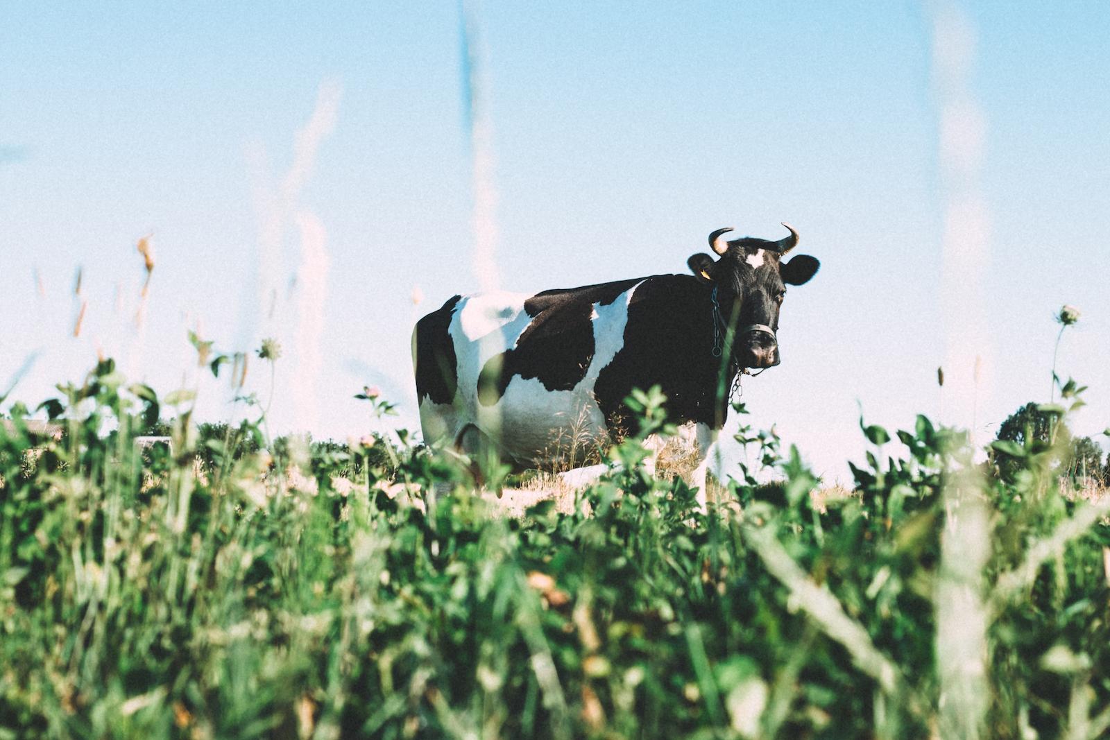 latte come cibo di origine animale e quindi come cibo nutriente per uomo e ambiente